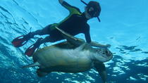 Snorkeling Tour with Sea Turtles and Stingrays, Tenerife, Snorkeling