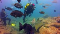 Two Fantastic Dives for Certified Divers, Tenerife, Other Water Sports