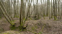 World War 1 walk throught the trenches, into bunkers and hear the diary stories, Paris, 4WD, ATV &...