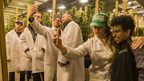 The Kush Tour - Cannabis, Glass, Garden, Extraction and More!, Seattle, Day Trips