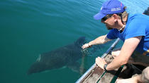 Whale Watching Tour, Cape Town, Day Cruises