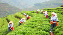Private Tour:One Day Anxi Tea Culture and Tea Capital Tour From Xiamen, Xiamen, Private Sightseeing...