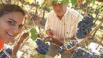 premium wine tour, Albufeira, Wine Tasting & Winery Tours