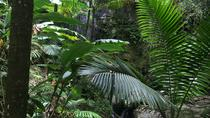 Rainforest Tour from San Juan, San Juan, Nature & Wildlife