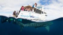 VIP luxury chartered escapes, exploring the reef at your own pace, Exmouth, Day Cruises