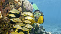Extreme Adventure and Snorkel Combo Tour from Riviera Maya, Playa del Carmen, Snorkeling