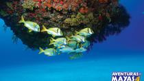 Snorkel Xtreme Cancun, Cancun, Snorkeling