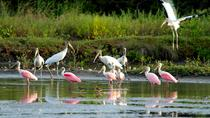 Birdwatching at Mundo Aventura Natural Park, La Fortuna, Nature & Wildlife