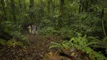 Jungle Expedition through The Childrens Eternal Rainforest, La Fortuna, Nature & Wildlife