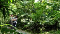 Nature Walk at Ecogolical Park and Butterfly Garden Danaus, La Fortuna, Hiking & Camping