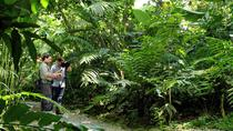Nature Walk at Ecological Park and Butterfly Garden Danaus, La Fortuna, Hiking & Camping