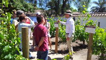 Santa Rita Winery Selection Tour, Santiago, Wine Tasting & Winery Tours
