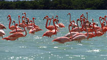 Rio Lagartos and Las Coloradas from Merida, Merida, Private Sightseeing Tours