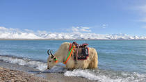 2-Day Small-Group Lake Namtso Experience from Lhasa, Lhassa