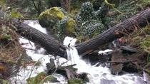 2-Hour Guided Rainforest Hike, Victoria, Nature & Wildlife