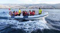 Whale, Dolphin and Turtles Watching, Funchal, Day Cruises