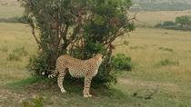 4 DAYS IN MASAI MARA AND LAKE NAKURU, Nairobi, Cultural Tours
