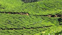 Best of Kerala 7 Days Private Tour from Cochin with Munnar ,Thekkady & Houseboat, Kochi, Private...