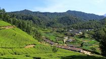 Highlights of Munnar Small Group Sightseeing Tour, Munnar, Day Trips