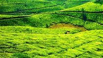 Munnar Sightseeing Tour with Plantation walk - Private Tour, Munnar, Plantation Tours