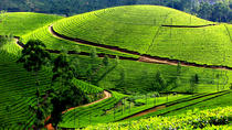 Private 7-Day Kerala Tour From Kochi With Aleppey Houseboat Cruise, コーチ