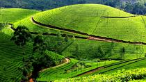 Private Day Trip to Munnar from Kochi (Cochin), Kochi, Private Day Trips