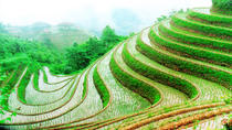 Guilin Private Tour: Longji Rice Terraces Day Tour in Longsheng , Guilin, Plantation Tours
