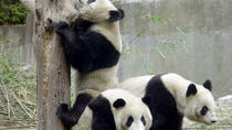 Private Chengdu Day Tour Including Giant Pandas and the Jinsha Site Museum, Chengdu, null