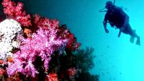 2 Tank Dive in Cozumel, Playa del Carmen, Scuba Diving