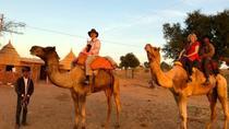Jodhpur Camel Safari -Private Day Tours, Jodhpur, Nature & Wildlife