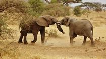 Tarangire National Park Day Trip, Arusha, Day Trips