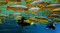 Recanto Ecologico Rio da Prata Admission Ticket including Trail and Snorkeling, Bonito, null
