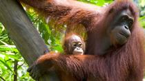 Private Bali Zoo Day Tour and Swim at Waterfall, Ubud, Private Sightseeing Tours