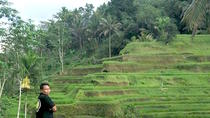 Private Shore Excursion: Best of Bali, Ubud, Ports of Call Tours