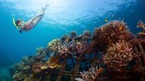 USS Liberty Shipwreck Snorkeling at Tulamben Bali, Ubud, Day Trips