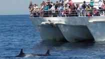 Port Stephens Dolphin Watch Tour from Sydney, Sydney, Private Sightseeing Tours