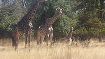 Game Drive In The Mosi-oa-Tunya National Park, Livingstone, Attraction Tickets