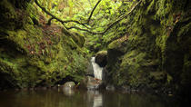 Levada do Moinho, Funchal, Day Trips