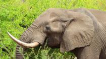 8 Days Cape to Addo Safari, Cape Town, Multi-day Tours