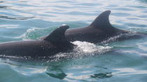 Golfito Dolphin Tour, Osa Peninsula & Gulfo Dulce, Cultural Tours