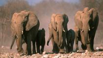 3-Day Etosha Tour from Windhoek , Windhoek, Multi-day Tours