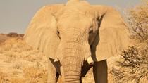 7 Day Northern Namibia Adventure - Camping Tour, Windhoek, Multi-day Tours