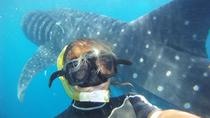 Snorkel and Swim with a Whale Shark Tour, Playa del Carmen, Snorkeling
