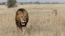 Classic Tanzania Safari, Arusha, Multi-day Tours