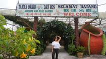 Cameron Highlands Day Tour Strawberry Park, Tea Plantation & Iskandar Waterfalls, Kuala Lumpur, ...