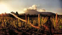 Wine Tasting on the Slopes of Vesuvius Including Lunch, Pompeii, Wine Tasting & Winery Tours