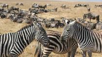 Cape Town 3-Day Attraction Tour: Aquila Safari Tour, Helicopter Tour & Cape Peninsula, Cape Town,...