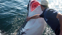 Cape town, Shark Diving Gansbaai, Cape Town, Cultural Tours