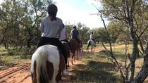 1 Hour Horseback Trail, Pretoria, Horseback Riding