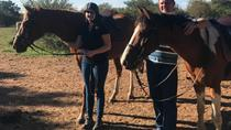 1 Hour Horseback Trail with lunch platter, Pretoria, Horseback Riding